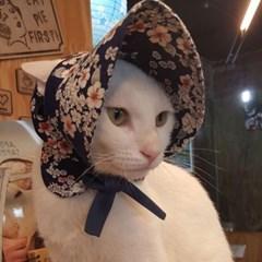 천송이 바나썬캡 강아지 고양이 썬캡 모자 아소비진