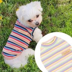 무지개골지티 강아지티셔츠 애견옷 강아지옷 애견산책옷