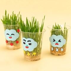 어린이 밀싹 식물 키우기 키트 5세트 관찰지