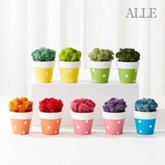 1+1 공기정화식물 스칸디아모스 물방울화분 9종