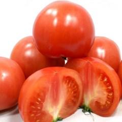 [남도장터] 완숙 토마토 5kg 4~5번과