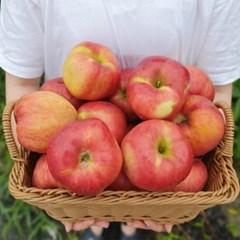 [남도장터] 햇사과 2.5kg(중) 12과내외