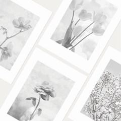 flora postcard(mono ver.)
