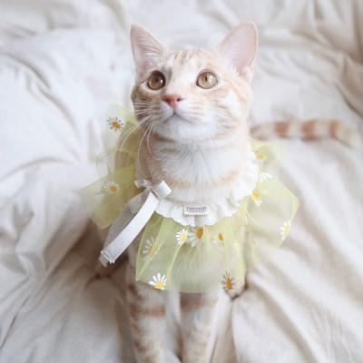 개달당 샤랄라 꽃 쉬폰 레이스 고양이케이프 강아지케이프