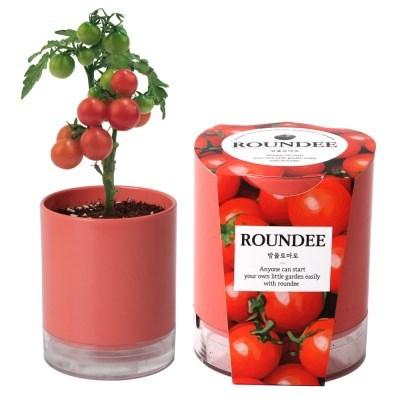[꿈쟁이] 원형화분 라운디 방울토마토 씨앗 심기 식물 키우기