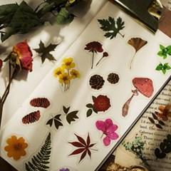 미니 꽃 플라워 꽃잎 압화 스티커 다이어리꾸미기 8종