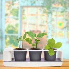 그린썸 팜팜 모종키우기 3종세트 저면관수 화분