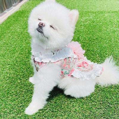 페이즐 라비앙 로제 원피스 - 핑크