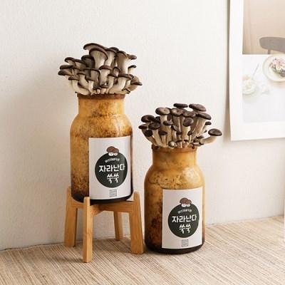 소소한잡화점 느타리버섯 키우기 키트 2P