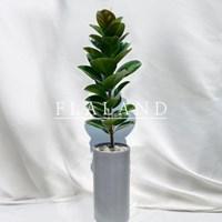 플라랜드 공기정화식물 특대형 고무나무 FRP 화분(서울/경기)