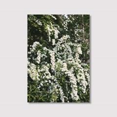 White flowers (5070 size) - Jitten 인테리어 포스터