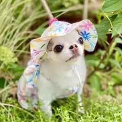 트로피칼 플라워 강아지모자 포쉬독