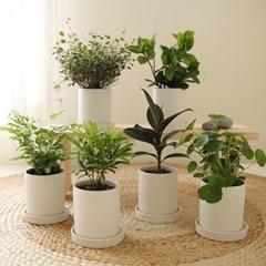[plant] 초록초록 애완미니식물화분 7종_(981661)