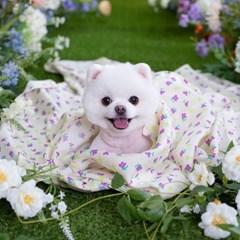 멀티 인견 강아지 고양이 여름 블랭킷 젤리플라워