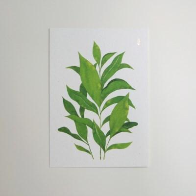 인테리어 엽서 초록