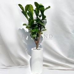 [고급물받침세트] 개업화분 테라조원형 특대형 떡갈고무나무