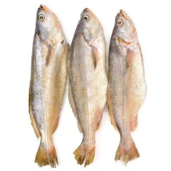 국내산 자연산 반건조 민어 조기 3미 (37cm440g내외)