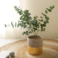[plant] 비염에좋은 유칼립투스 골드식물화분set_(983238)