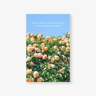 [메리필름] 감성 명언을 담은 글귀 미니 엽서 - 핑크 로즈