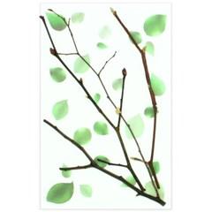 에코누름나무세트