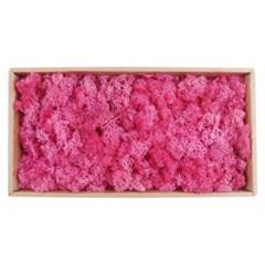 미미네가든 스칸디아모스 핑크색 1박스 (500g) - 가습_(1301087)
