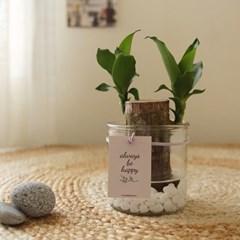 [수경식물] 행운을부르는 행운목 유리화병세트_(985366)