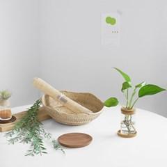 공기정화식물 & 우든 수경 유리병 SET