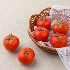 리릿추천 찰토마토 1kg(1-3번과)