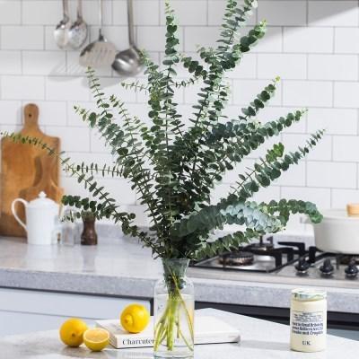 생화 비염완화 공기정화식물 유칼립투스 블랙잭