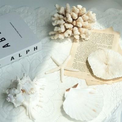 바다 인테리어 오브제 모음 - 산호 조개 버섯