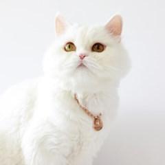 강아지 고양이 이름표 목걸이 원형볼체인 골드컬러 2종