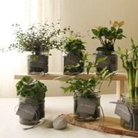 [plant] 공기정화식물 5종 - 수경재배화병세트(10x10)_(986255)