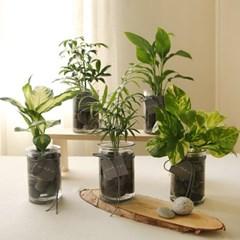 [plant] 공기정화식물 5종 - 수경재배화병세트(10x15)_(986254)