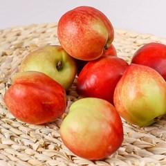 고당도 신비 복숭아 5kg(41-50과) 제철과일