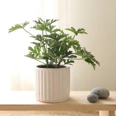 [더플라워마켓] 시원한 여름 생화 식물