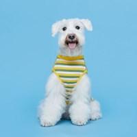 플로트 프레쉬민소매티셔츠 강아지옷 옐로우그린