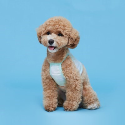 플로트 블렌드크롭나시 강아지옷 민트