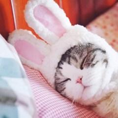 고양이 강아지 토끼 모자