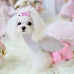 강아지 위생 팬티 레인보우 플라이