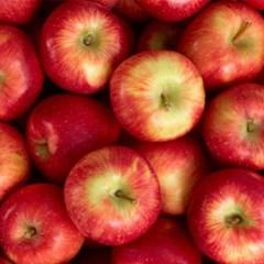 껍질째 먹는 사과 2kg(12과 내외)_(1166796)