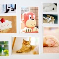 [레몬사자]사진 엽서 2매 세트-고양이와 함께하기 좋은 날