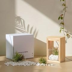 LED 틸란드시아 식물 성장등