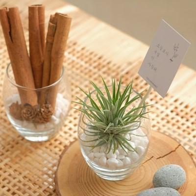[식물선물세트] 공기정화식물 이오난사 시나몬스틱 유리볼