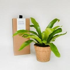 코코넛화분+선물박스 습도조절 인테리어 식물키우기_아비스