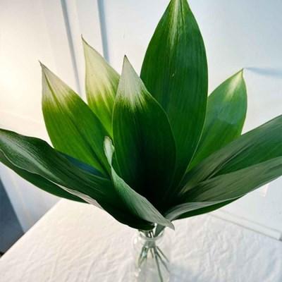 생화 수려함을 동반한 플랜테리어 식물 무늬엽난