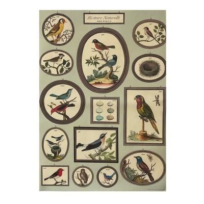 카발리니 일러스트 빈티지포스터 Birds
