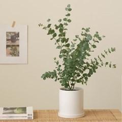 [PLANT] 비염에좋은 유칼립투스 모던식물화분