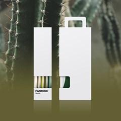 팬톤삭스 캑터스 Cactus 5종 세트