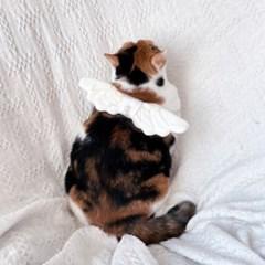 고양이 강아지 천사날개 코스프레 코스튬 Miyopet