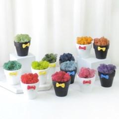 1+1 공기정화식물 스칸디아모스 하얀,까망 화분 12colors